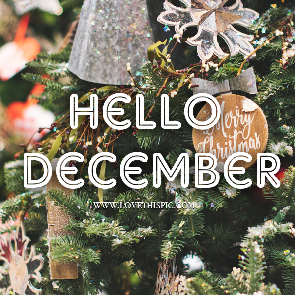 christmas tree hello quote pictures photos and images
