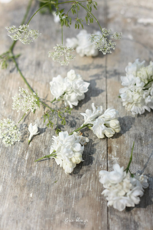 Scattered flowersScattered Photographs