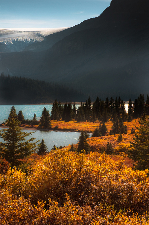Golden Yellow Landscape Pictures, Photos, and Images for