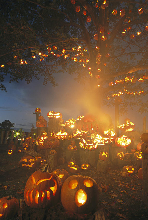 Pumpkin Tree Pictures, Photos, And Images For Facebook