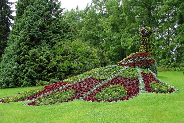 Peacock Garden Design