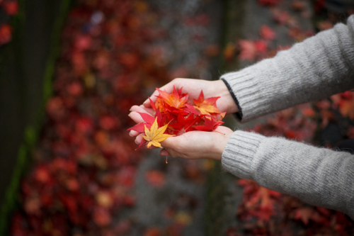 Hand Full Of Leaves Pictures, Photos, and Images for