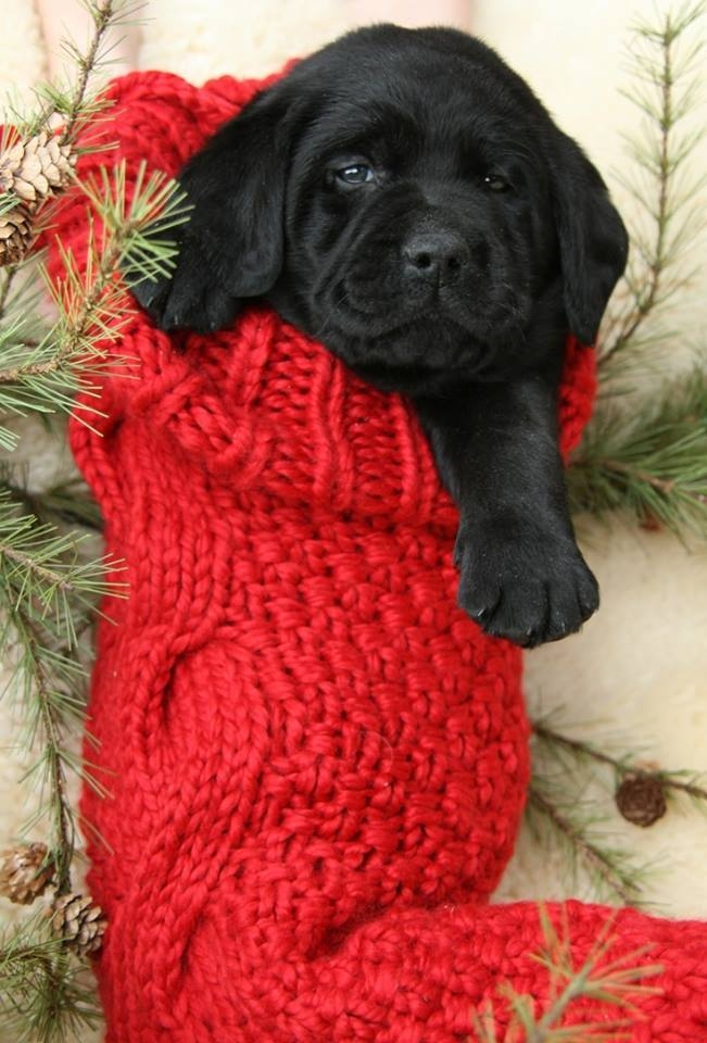 Adorable Stocking Stuffer Pictures, Photos, And Images For