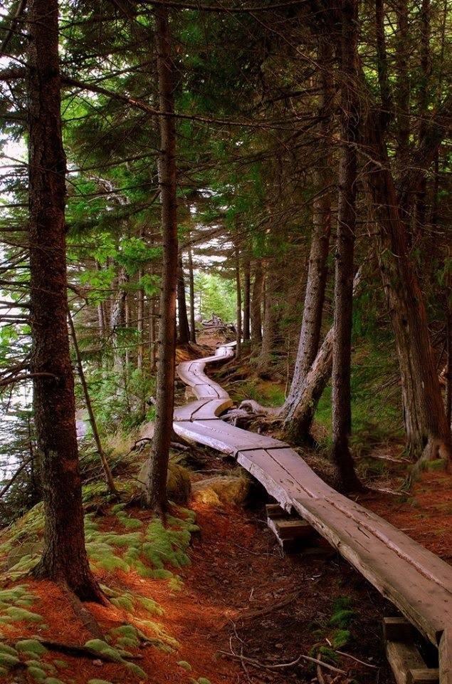 Forest Sidewalk