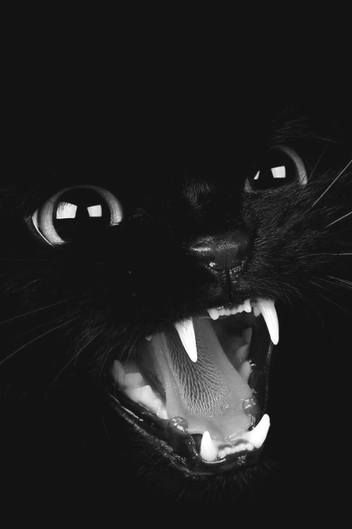 Black Cat Meow Pictures Photos And Images For Facebook