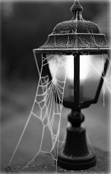 Street Light Cobwebs Pictures Photos And Images For