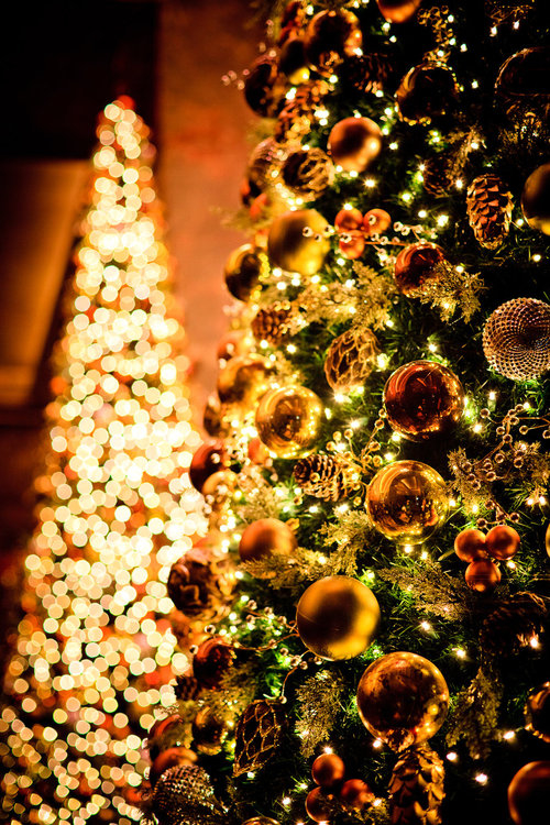 Beautiful Glowing Christmas Tree Pictures, Photos, and ...
