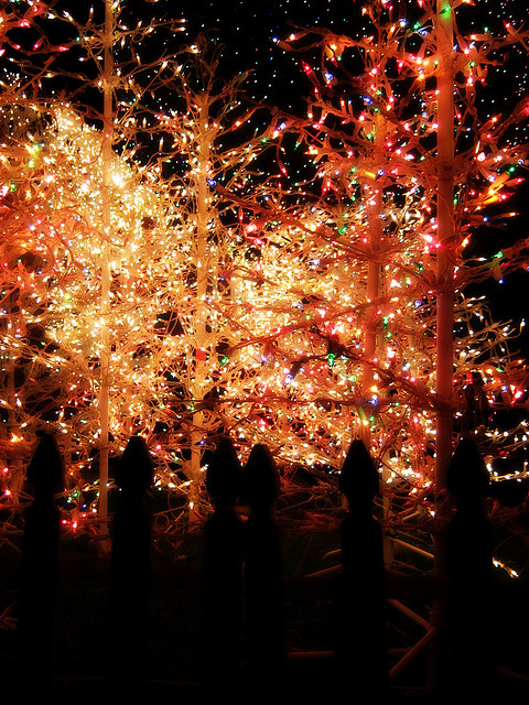 Bright Christmas Tree Lights Pictures, Photos, and Images ...