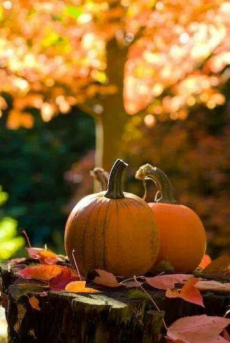 Image result for Fall images with pumpkin