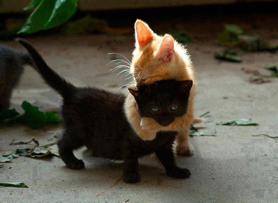Playful Kittens Pictures, Photos, and Images for Facebook ...