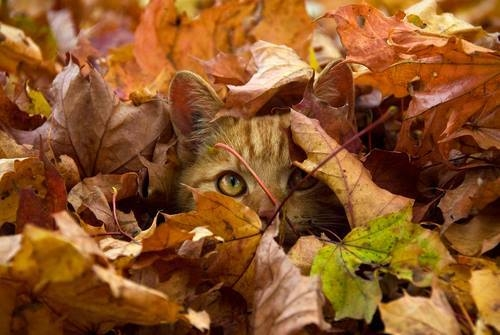 Image result for cat autumn images