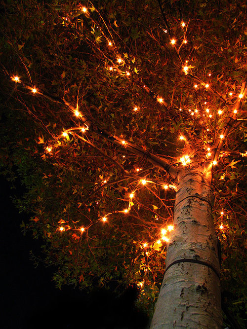 Autumn Tree Lights Pictures, Photos, And Images For