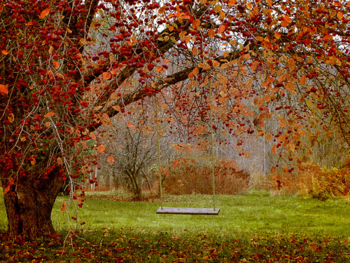 Autumn Swing Pictures Photos And Images For Facebook