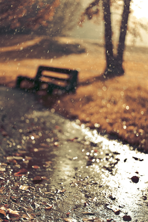 Autumn Rain Pictures, Photos, and Images for Facebook