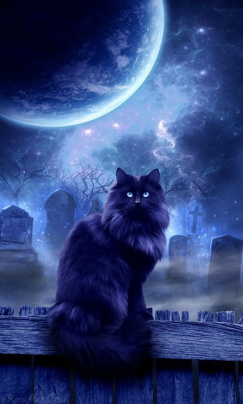 mystic cat pictures photos and images for facebook