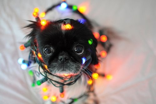 cute dog wrapped in christmas lights - Dog Christmas Lights