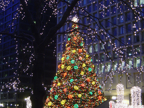 Christmas Tree Outside.Outside Christmas Tree Pictures Photos And Images For