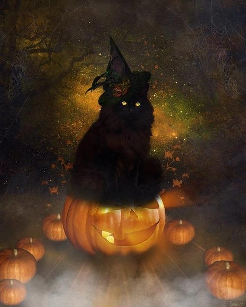 Beautiful Black Halloween Cat
