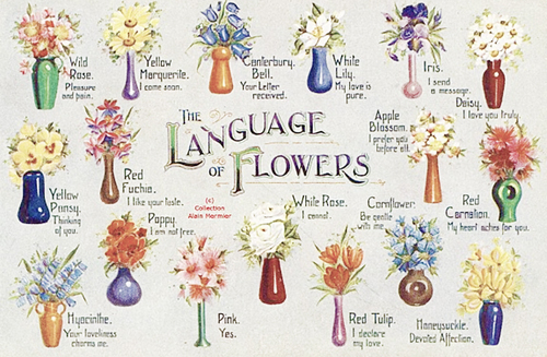 the language of flowers pictures photos and images for