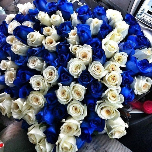 Blue and white roses pictures photos and images for facebook blue and white roses mightylinksfo Choice Image