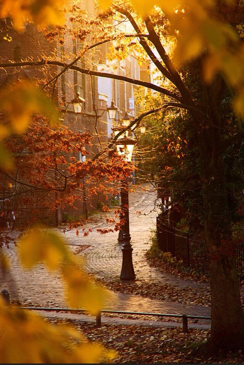 Autumn Lamp Post Pictures Photos And Images For Facebook