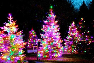 Colorful Christmas Tree Images.Bright And Colorful Christmas Trees Pictures Photos And