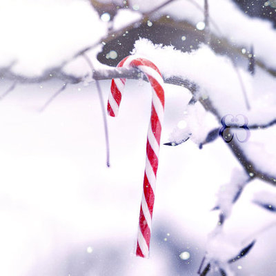 Candy Cane Hanging On A Tree Branch Pictures, Photos, and Images for ...