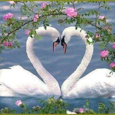 Authentic Love Symbol Pictures Photos And Images For Facebook