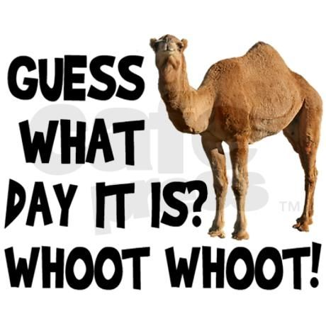Hump Day Camel Pictures, Photos, and Images for Facebook ...
