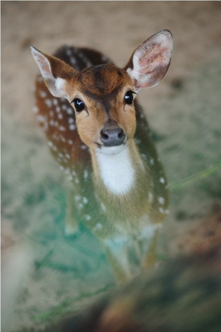 Adorable Deer Pictures, Photos, and Images for Facebook
