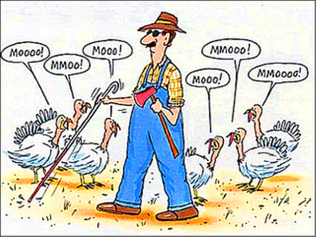 Chicken Jokes For Adults: Mooo Pictures, Photos, And Images For Facebook, Tumblr