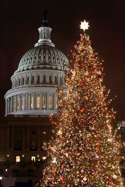 Christmas Tree Outside Of The White House Pictures Photos