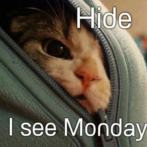 Hide I See Monday Pictures, Photos, and Images for ...