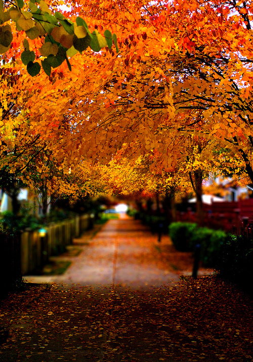 Orange Autumn Trees Pictures, Photos, And Images For