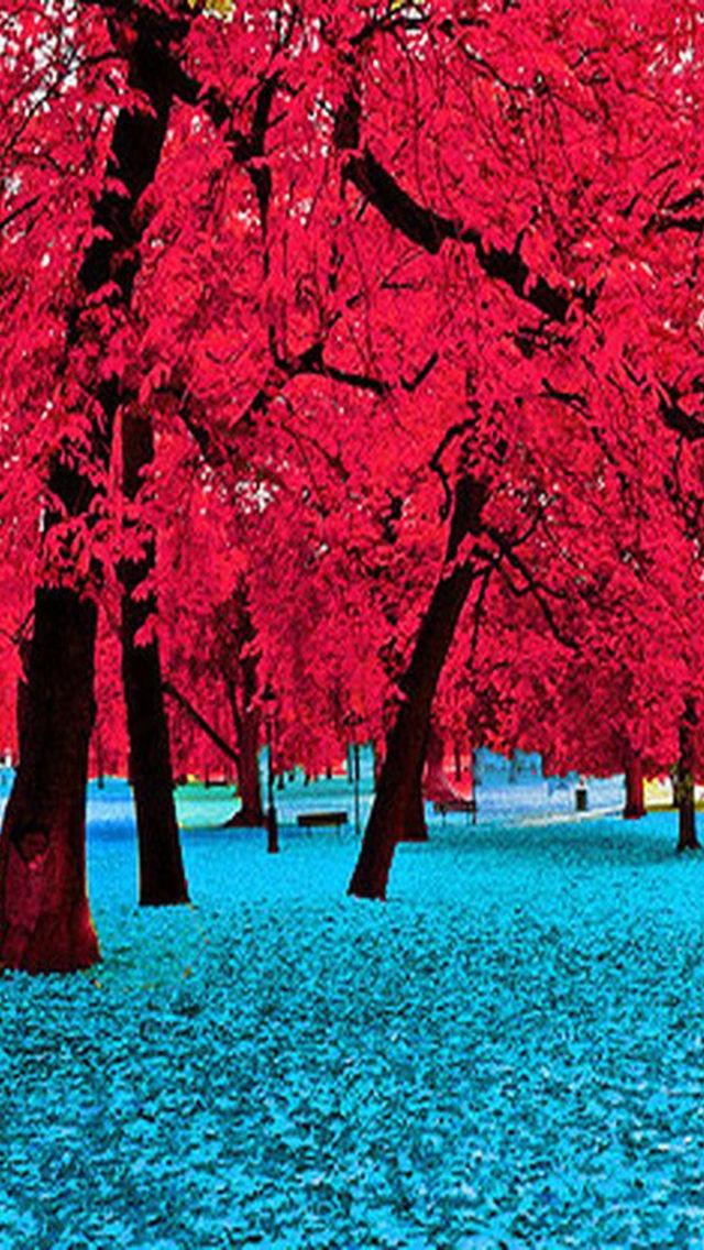 Pin by Diane Peloso on Autumn Glory   Good morning