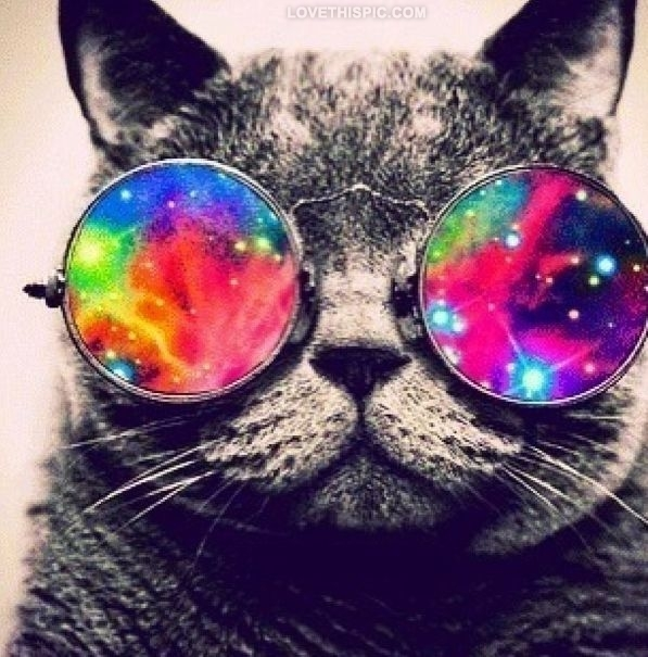 Tumblr Hippie Part - 18: Hippie Cat