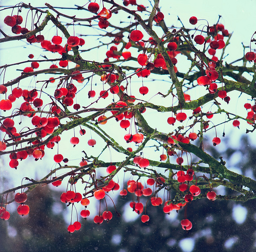 Pictures Images On Pinterest: Cherry Tree Pictures, Photos, And Images For Facebook
