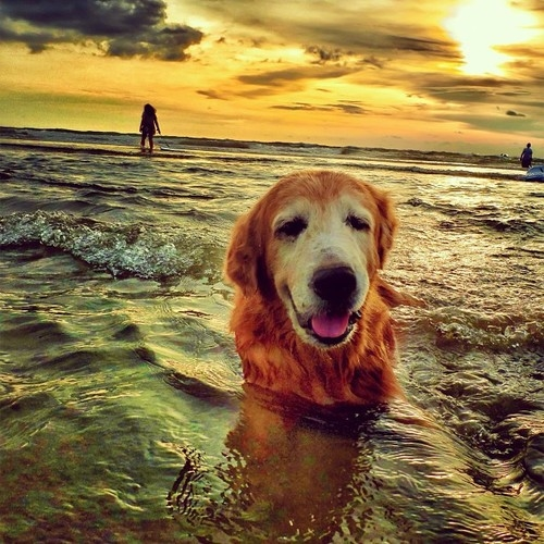 Beach Dog Pictures, Photos, And Images For Facebook