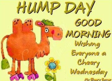 Good Morning Hump Day Pictures, Photos, and Images for ...