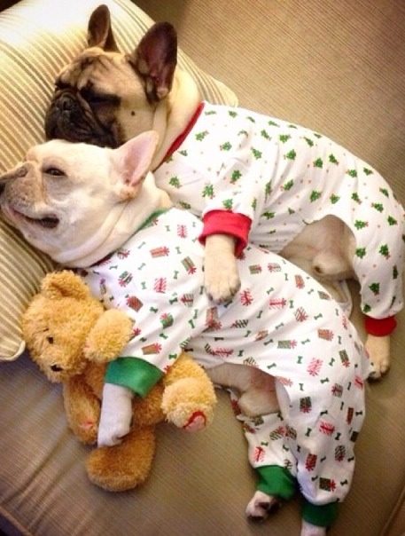 Christmas Pajamas For Dogs.Dog Holiday Pajamas Pictures Photos And Images For