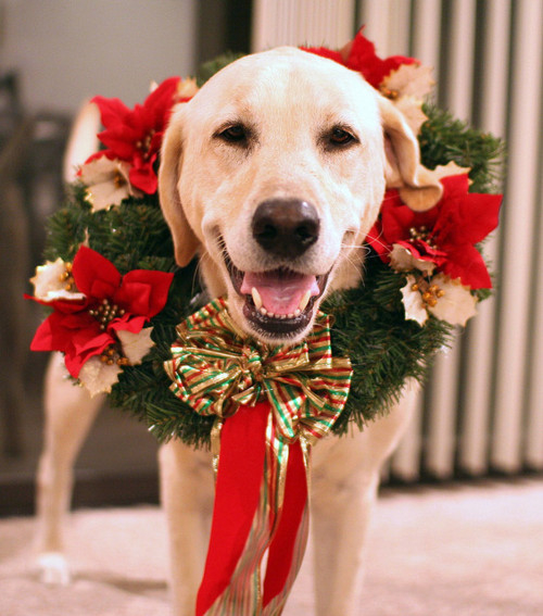Dog Wreath Pictures, Photos, And Images For Facebook