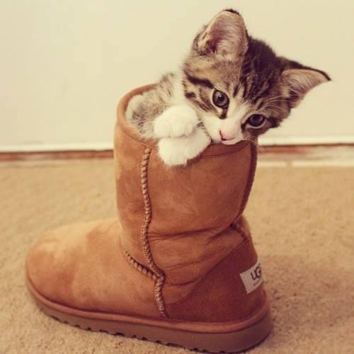 Ugg cat