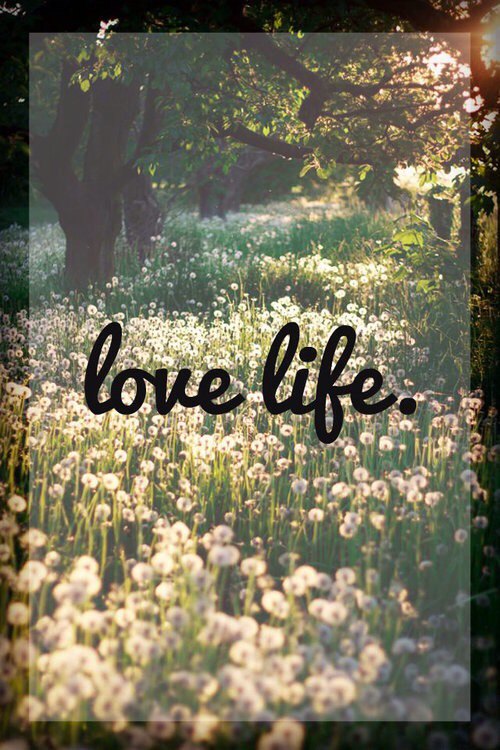 Love Life Pictures Photos And Images For Facebook Tumblr Fascinating Love Life Motivation Quotes