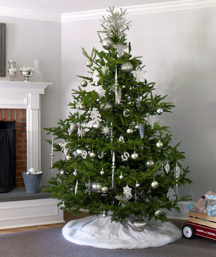 Elegant Evergreen Christmas Tree Pictures, Photos, And
