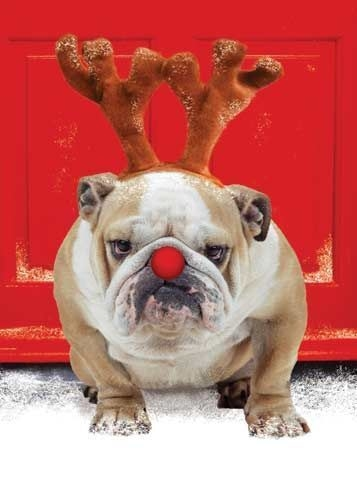 funny christmas bulldog - photo #2