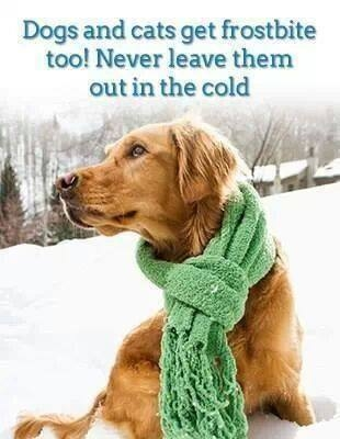Never leave pets outside in the cold!
