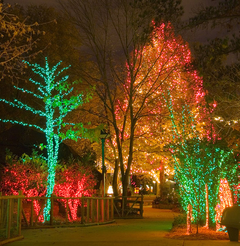 456 Best Christmas Lights Images On Pinterest: Christmas LED Lights Pictures, Photos, And Images For