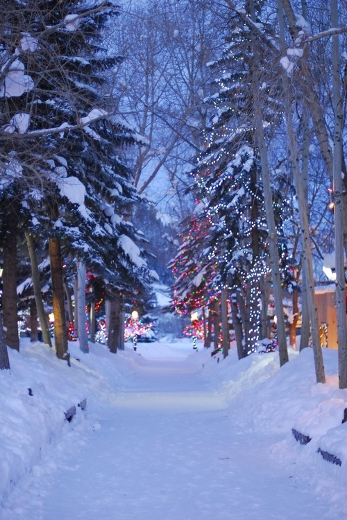 Christmas Lights Outdoors Pictures Photos And Images For