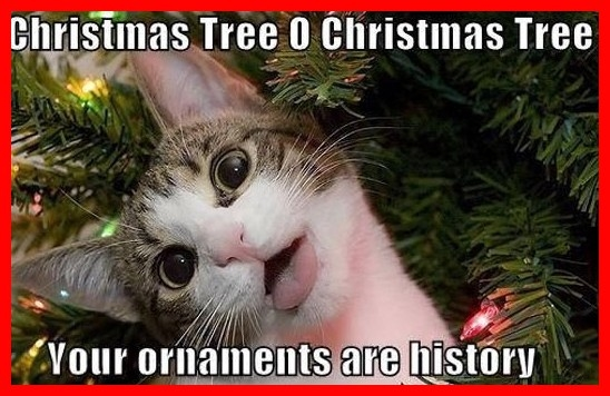 Crazy Christmas Cat Pictures, Photos, and Images for Facebook ...