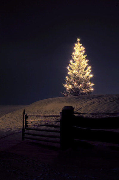 Christmas Tree In The Dark Pictures, Photos, and Images for ...